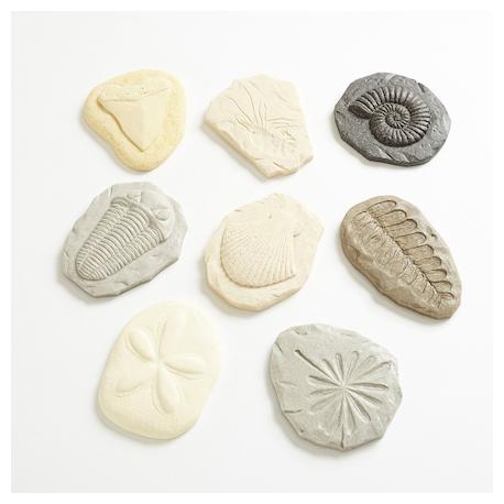 Coffret Découverte de fossiles