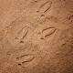 Pierres de découvertes Empreintes des animaux des bois